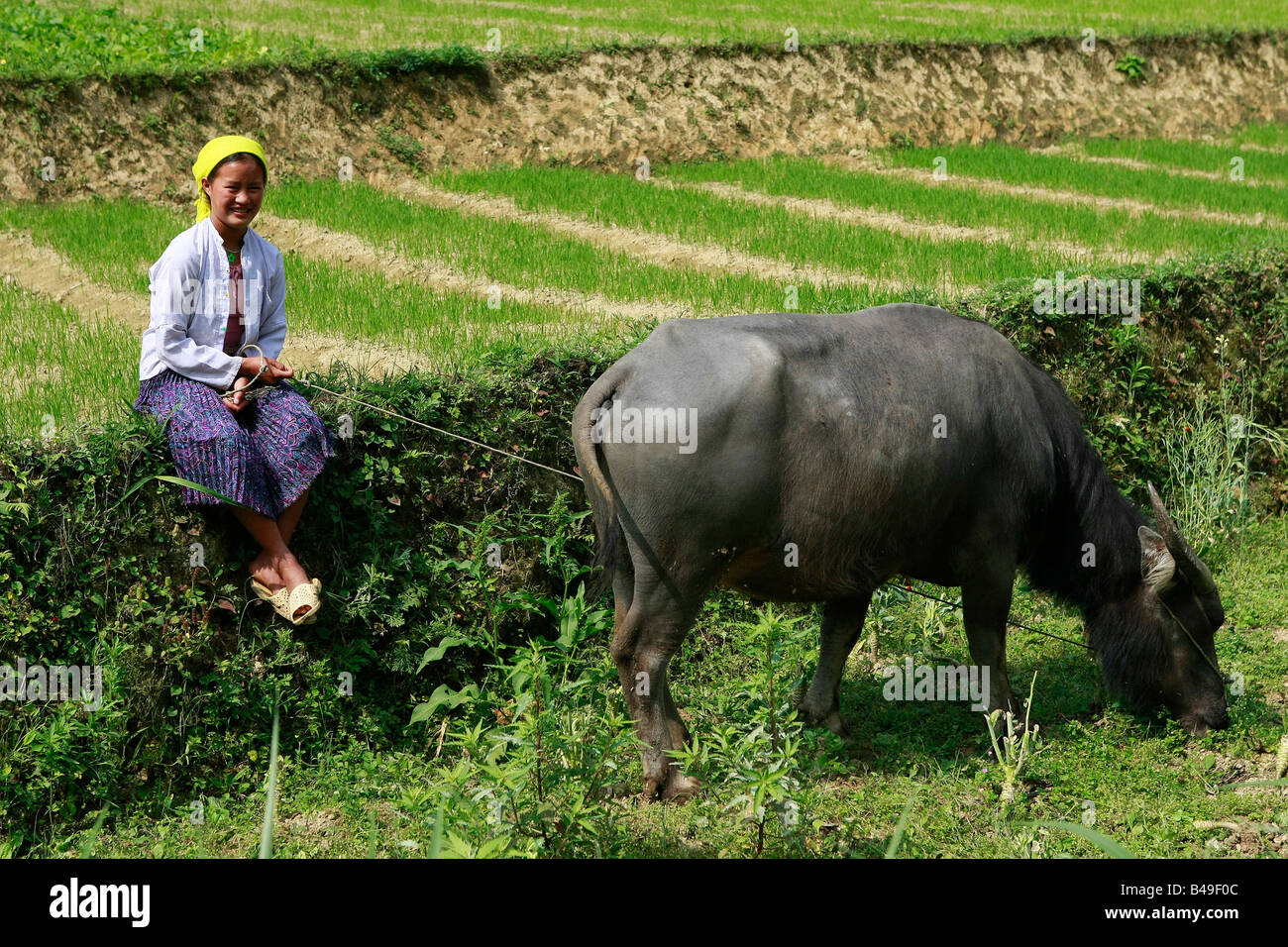 White Hmong Tribeswoman And Buffalo At The Village Of Pho Lao Dong Stock Photo Alamy