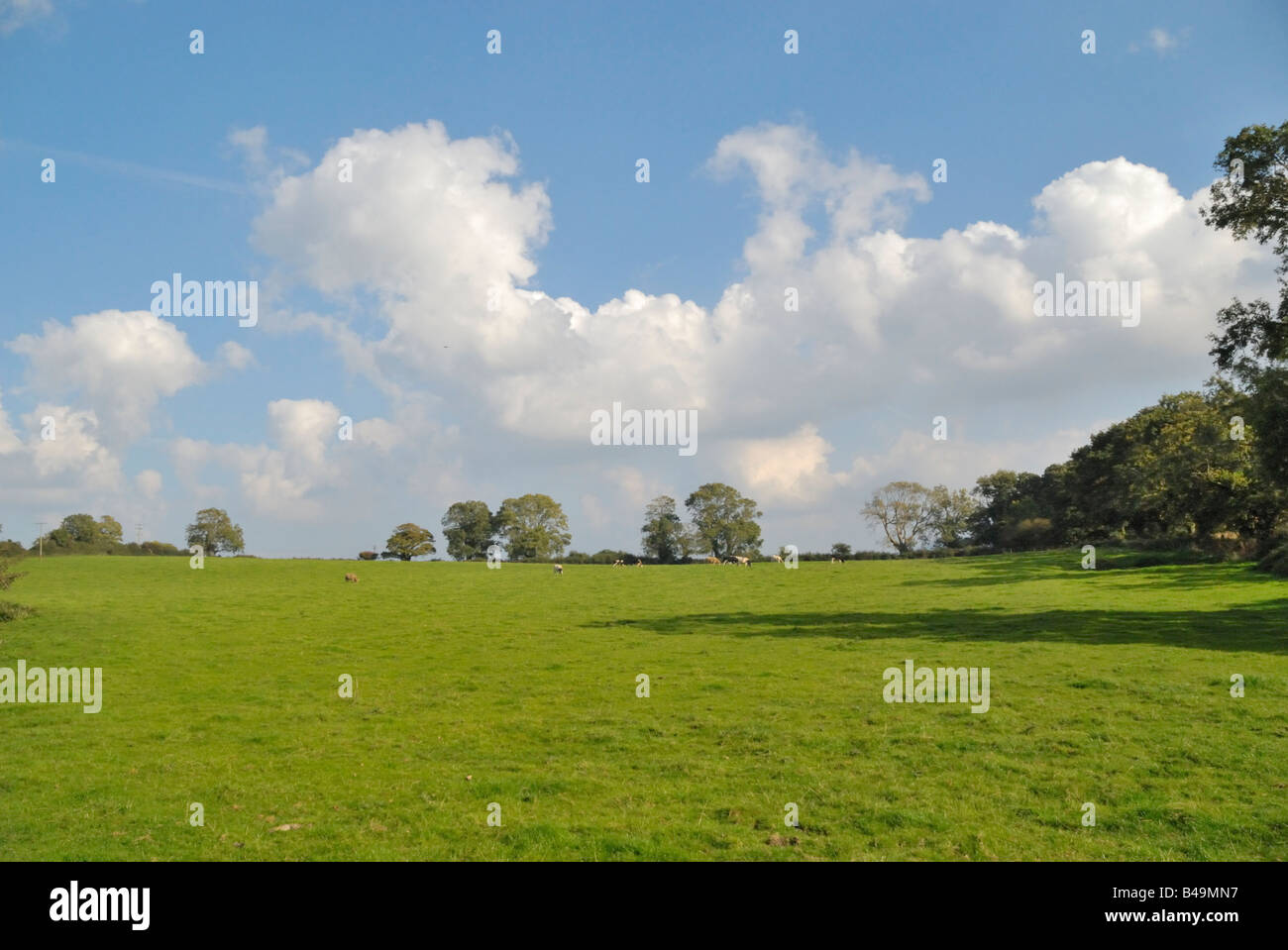 Pastoral scene with cos and clouds, Llangoed, Anglesey, Wales - Stock Image