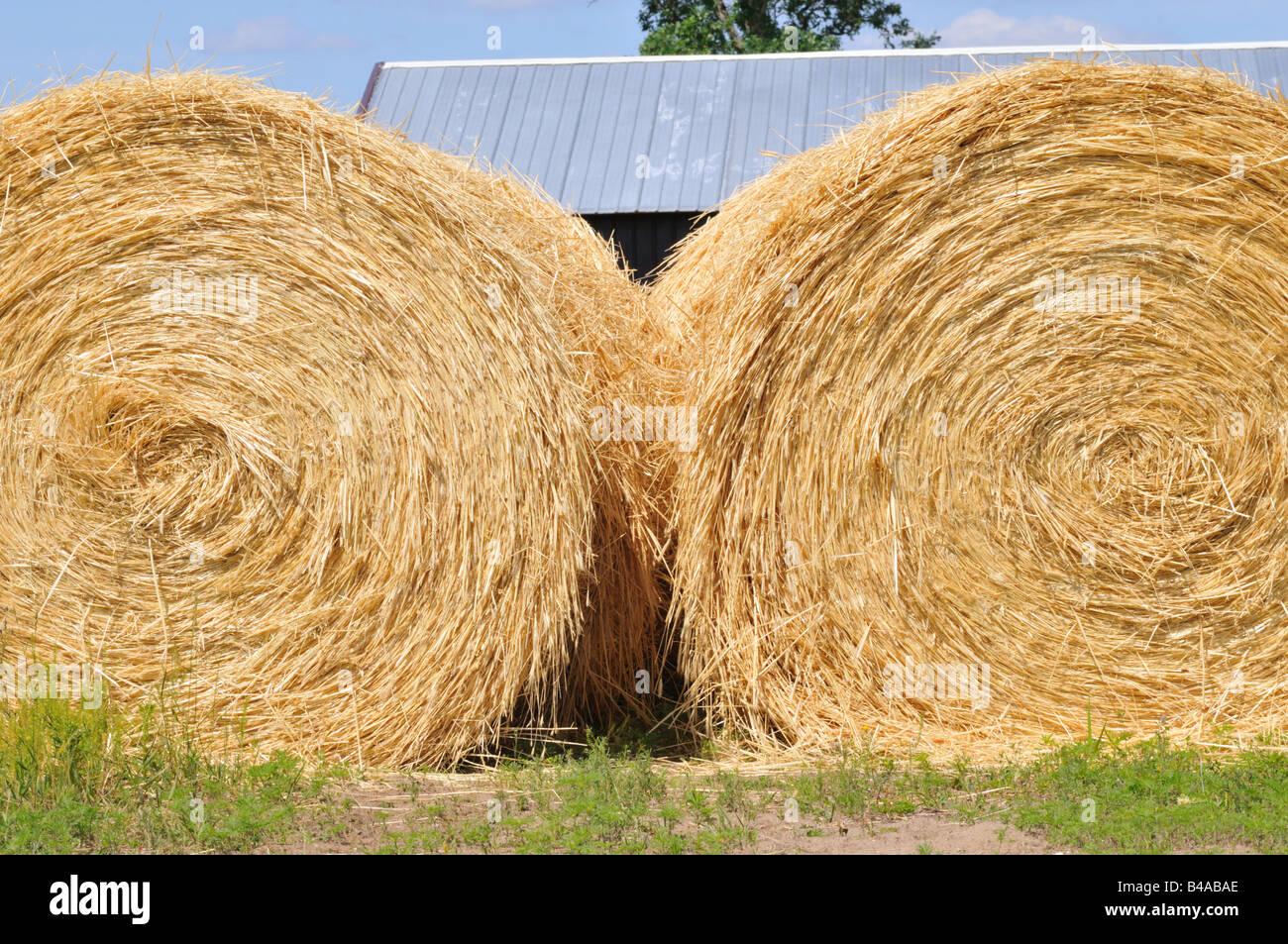 Hay. Stock Photo