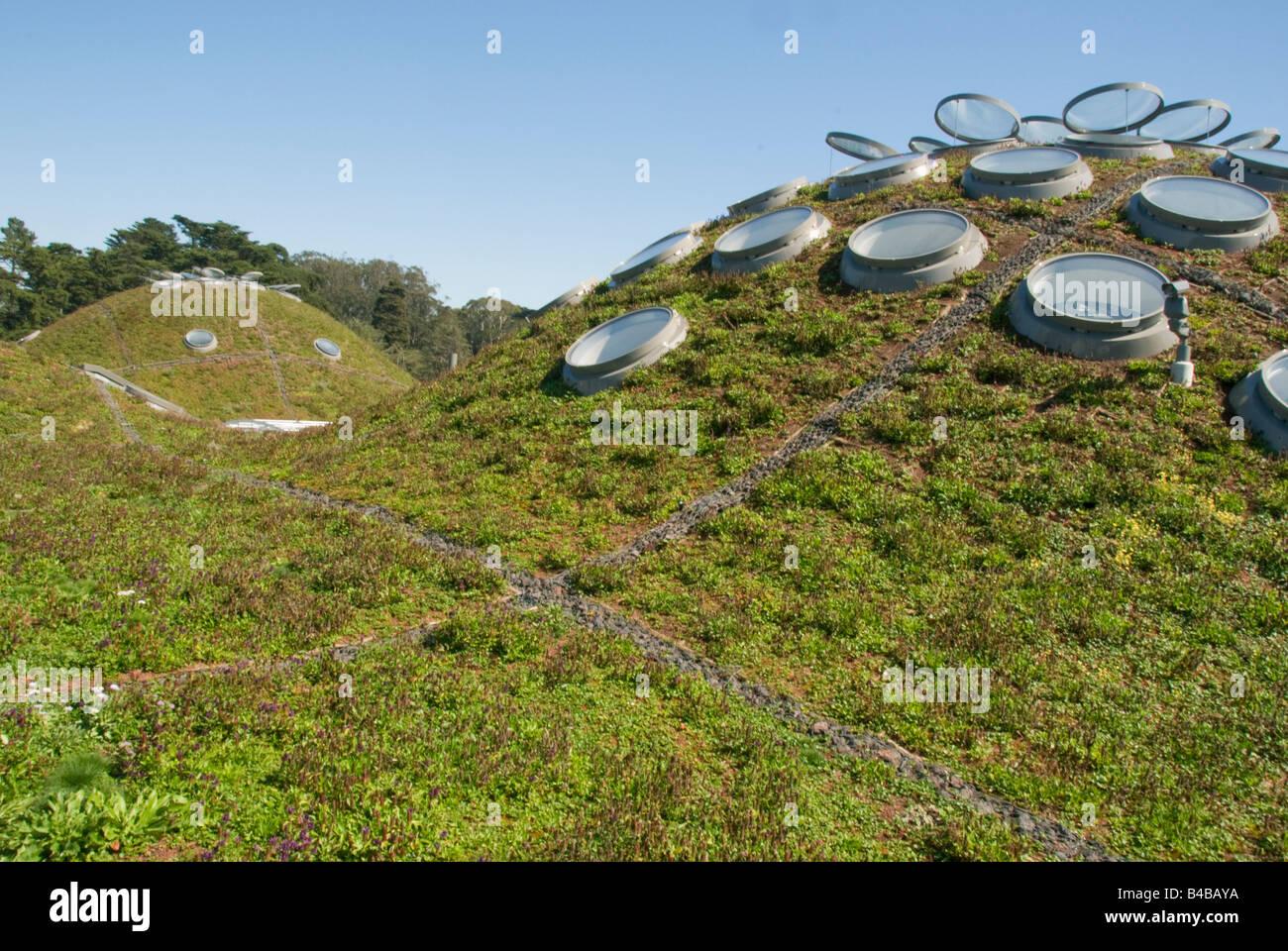 Living Roof, California Academy of Sciences, Renzo Piano, architect, opened September 2008, San Francisco California - Stock Image