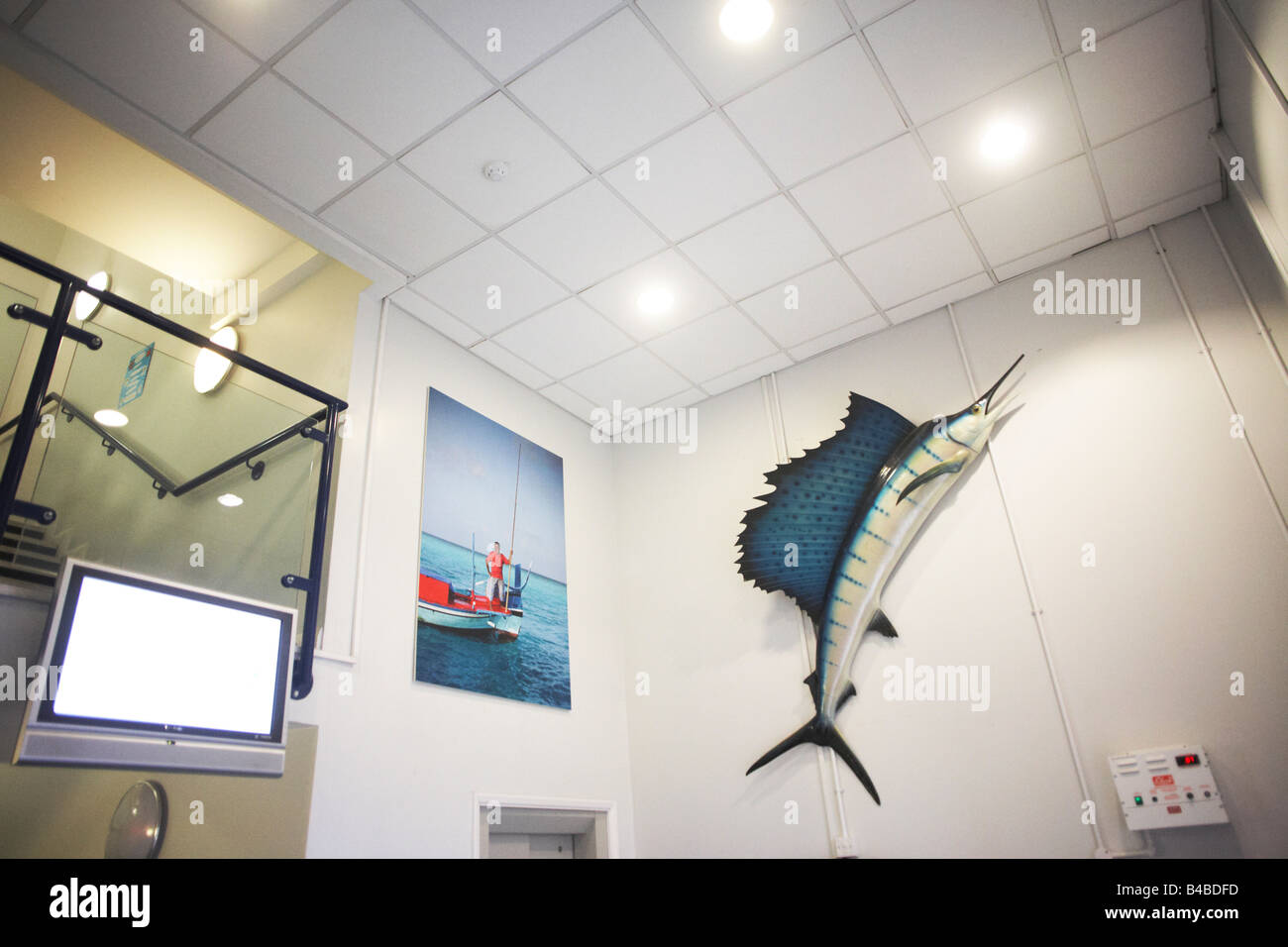 A model sailfish above main entrance atrium of New England Seafoods, importers of line-caught fish products from - Stock Image