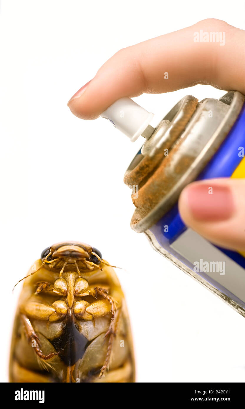 Beetle being sprayed with repellent - Stock Image
