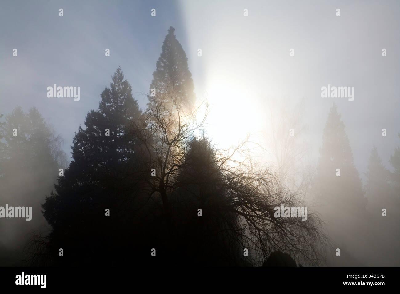 Sun shining through trees and fog,  Willamette Valley, Oregon, USA - Stock Image