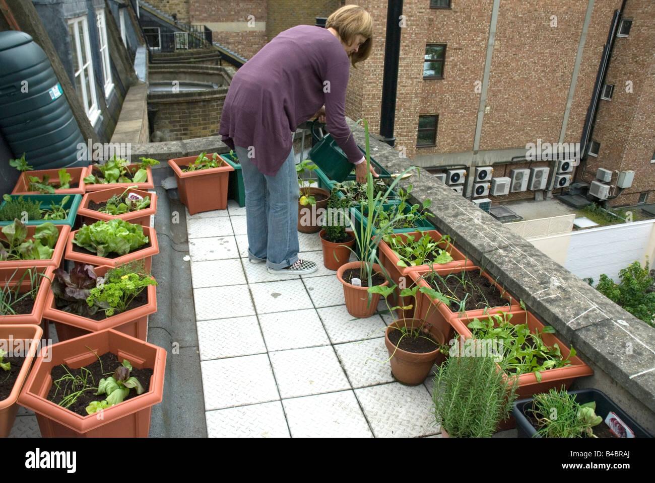 Rooftop Vegetable Garden Stock Photos Rooftop Vegetable Garden