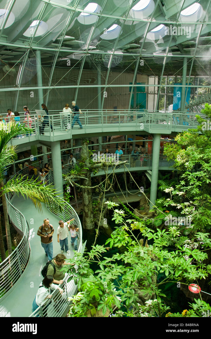 Rainforest Exhibit, California Academy of Sciences, Renzo Piano, architect, opened September 2008, San Francisco - Stock Image
