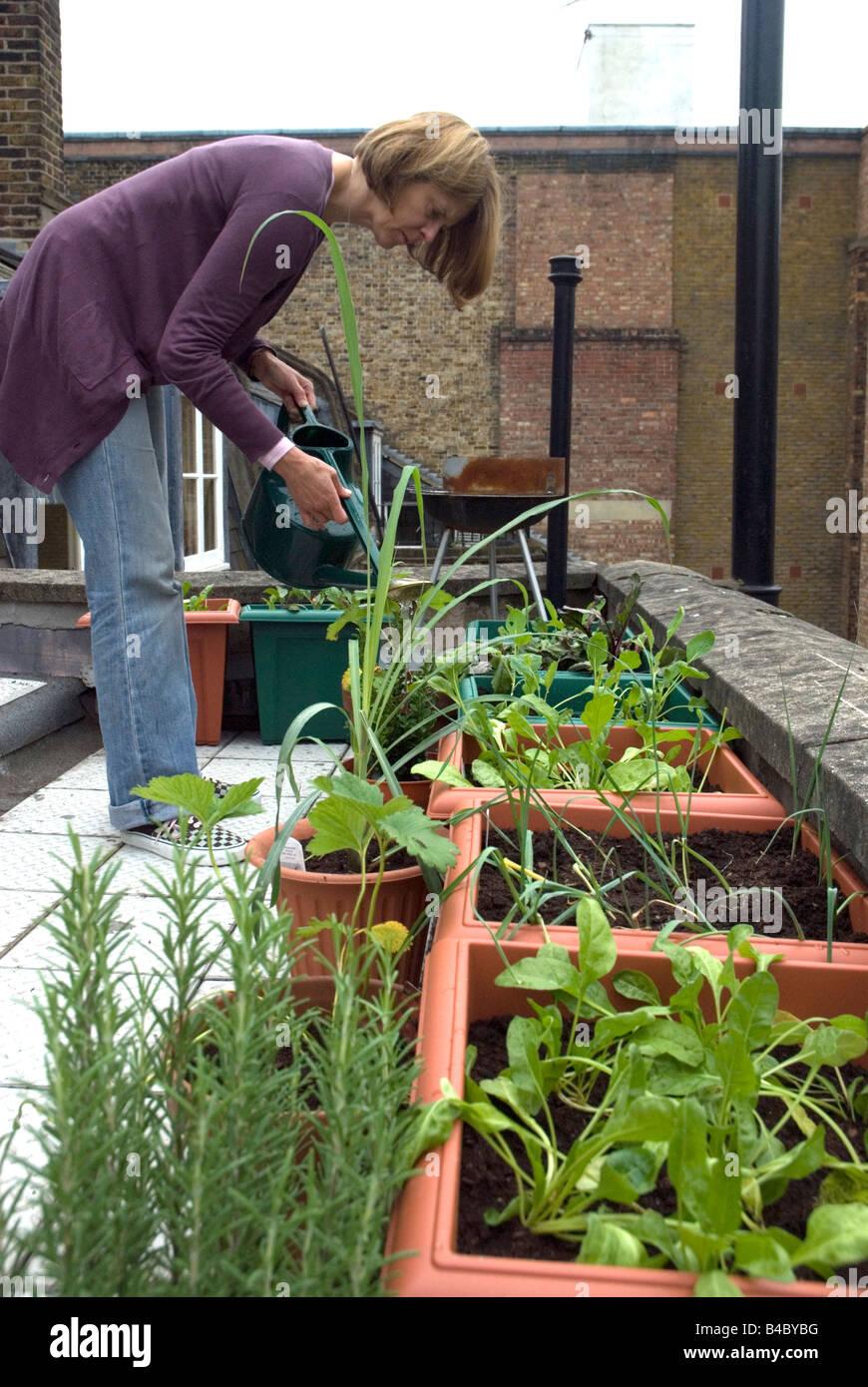 Woman Watering Vegetables Salads Urban Rooftop Vegetable Garden
