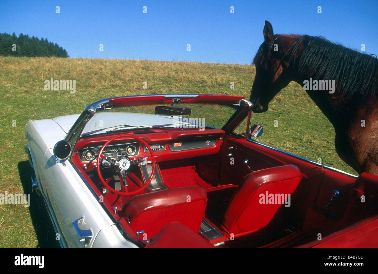car ford mustang convertible model year 1965 white vintage stock photo 19932093 alamy. Black Bedroom Furniture Sets. Home Design Ideas