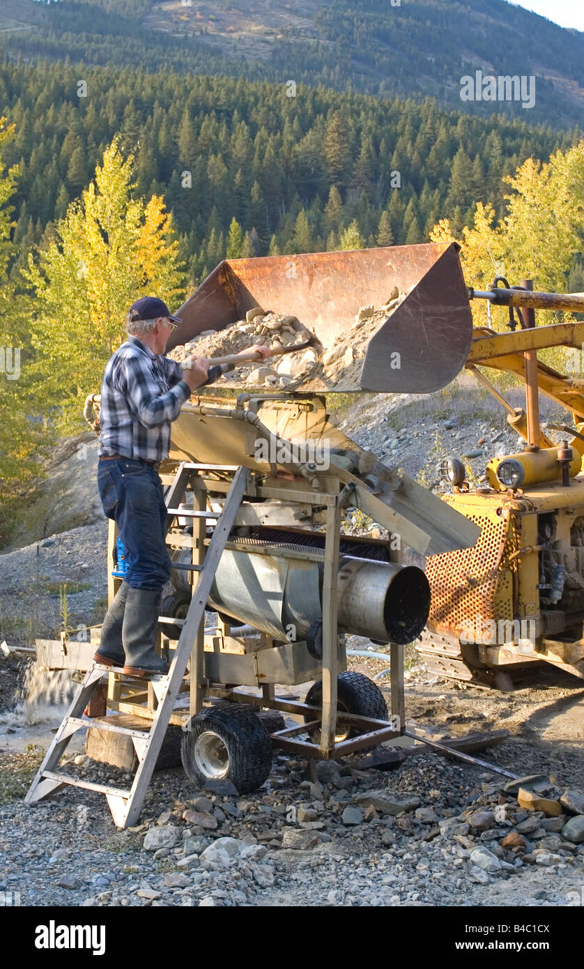 Prospector shoveling dirt from a tractor into a modified wash station. - Stock Image