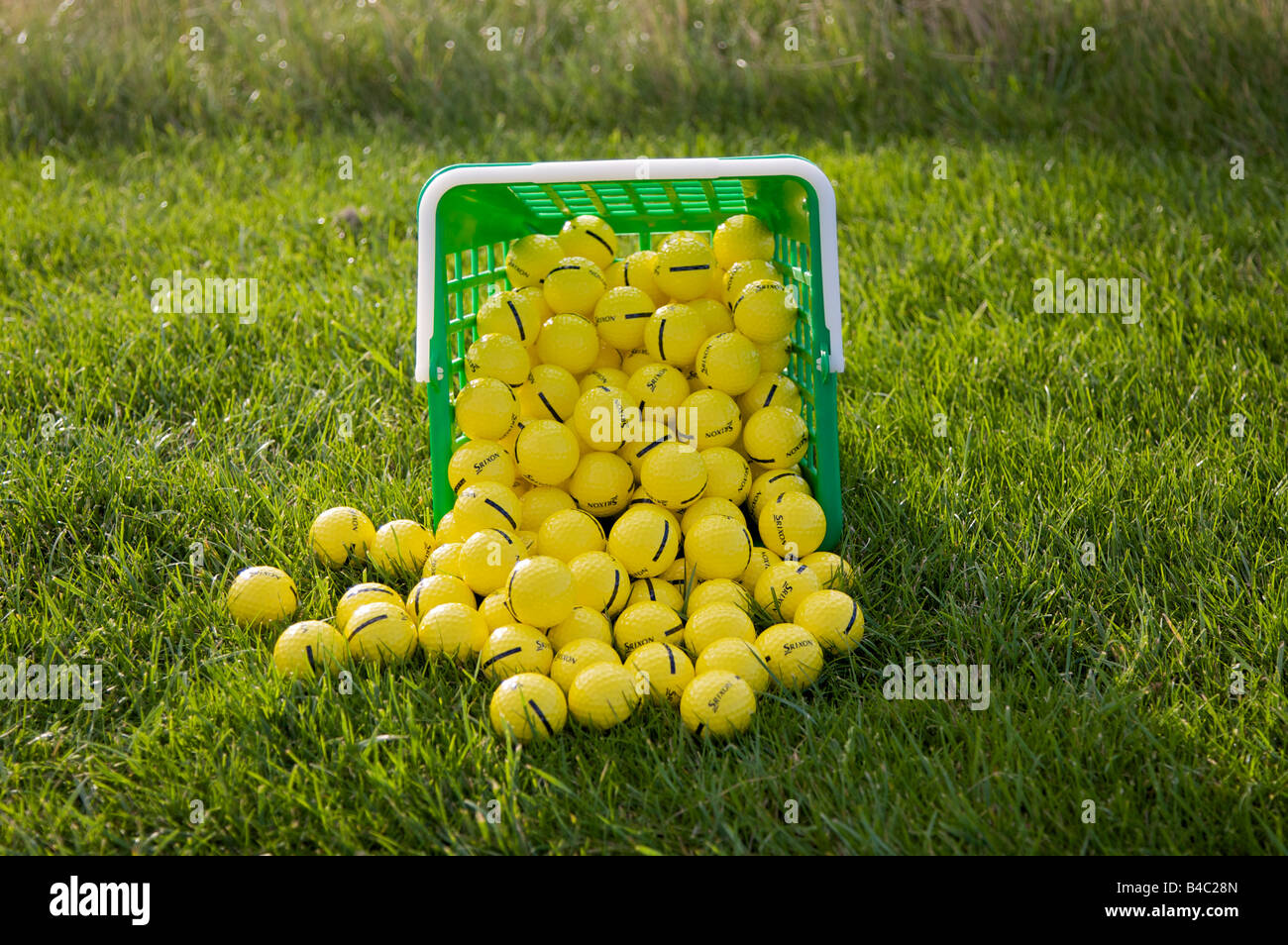 Basket of spilled golf balls ready for practice - Stock Image