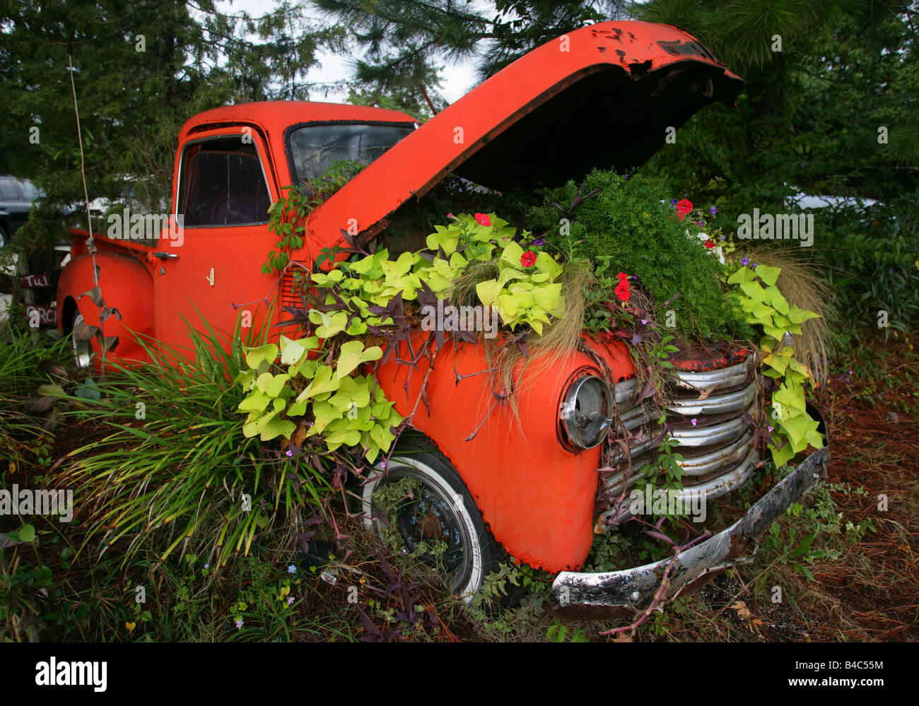 A vintage pick up truck used as a planter along the roadside in ...