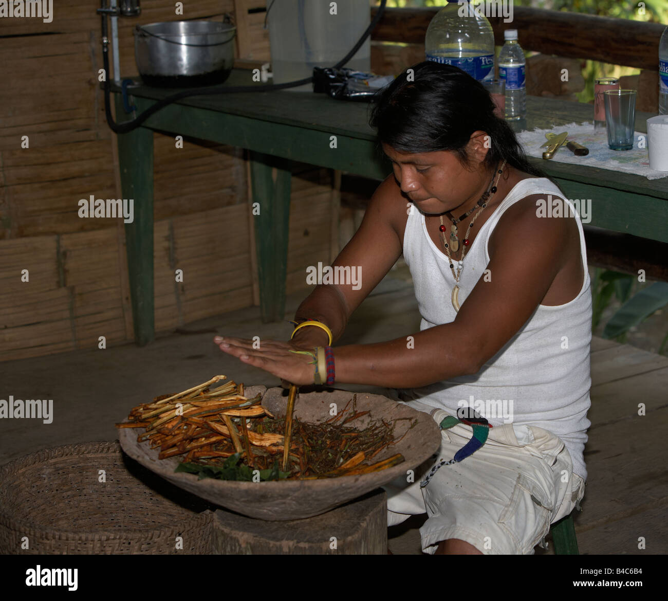 Native preparing herbs for medicine, Amazon Rain Forest, Ecuador - Stock Image