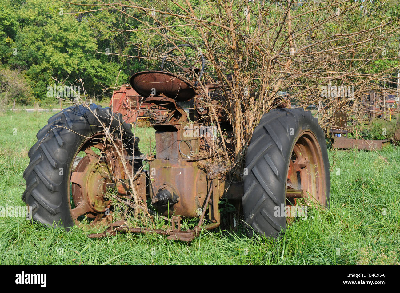 Old farm tractor no longer used with trees growing within - Stock Image