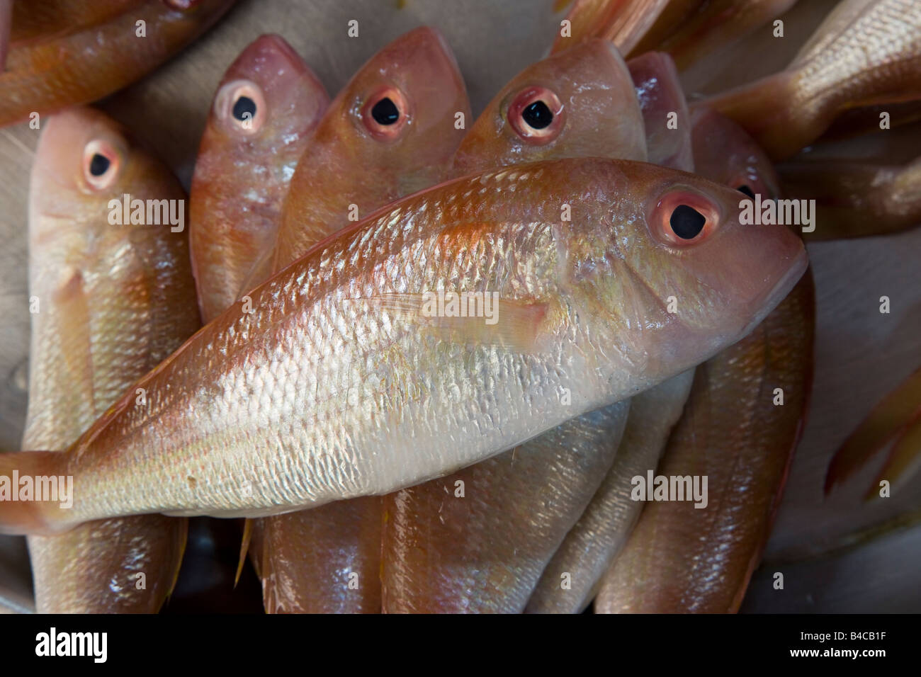 Asia, Malaysia, Kelantan State, Kota Bharu, fresh fish for sale in the towns central market - Stock Image