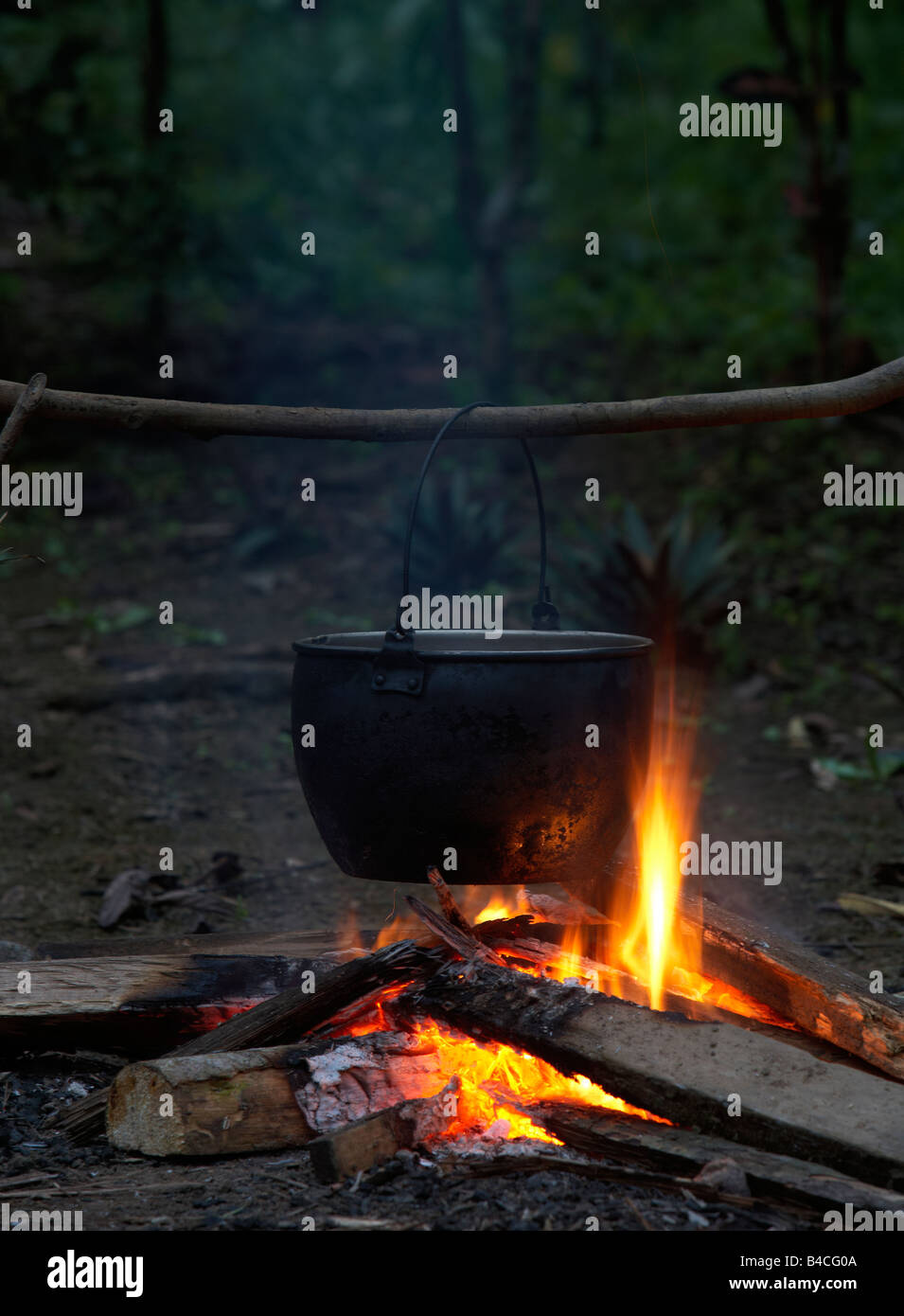 Cooking herbs for medicine man, Amazon Rain Forest - Stock Image