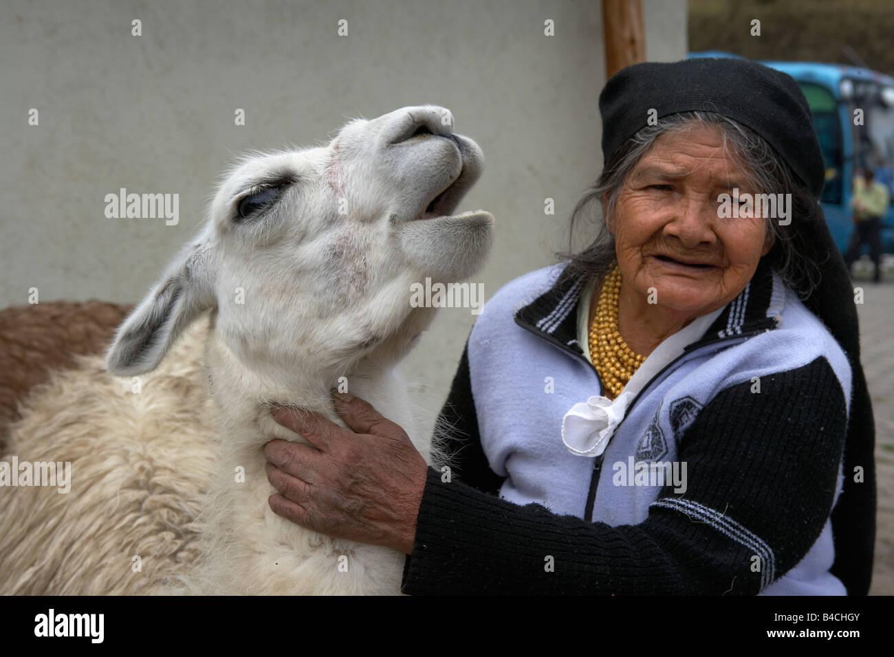Elderly, Woman with Llama, Otavalo,  Ecuador - Stock Image