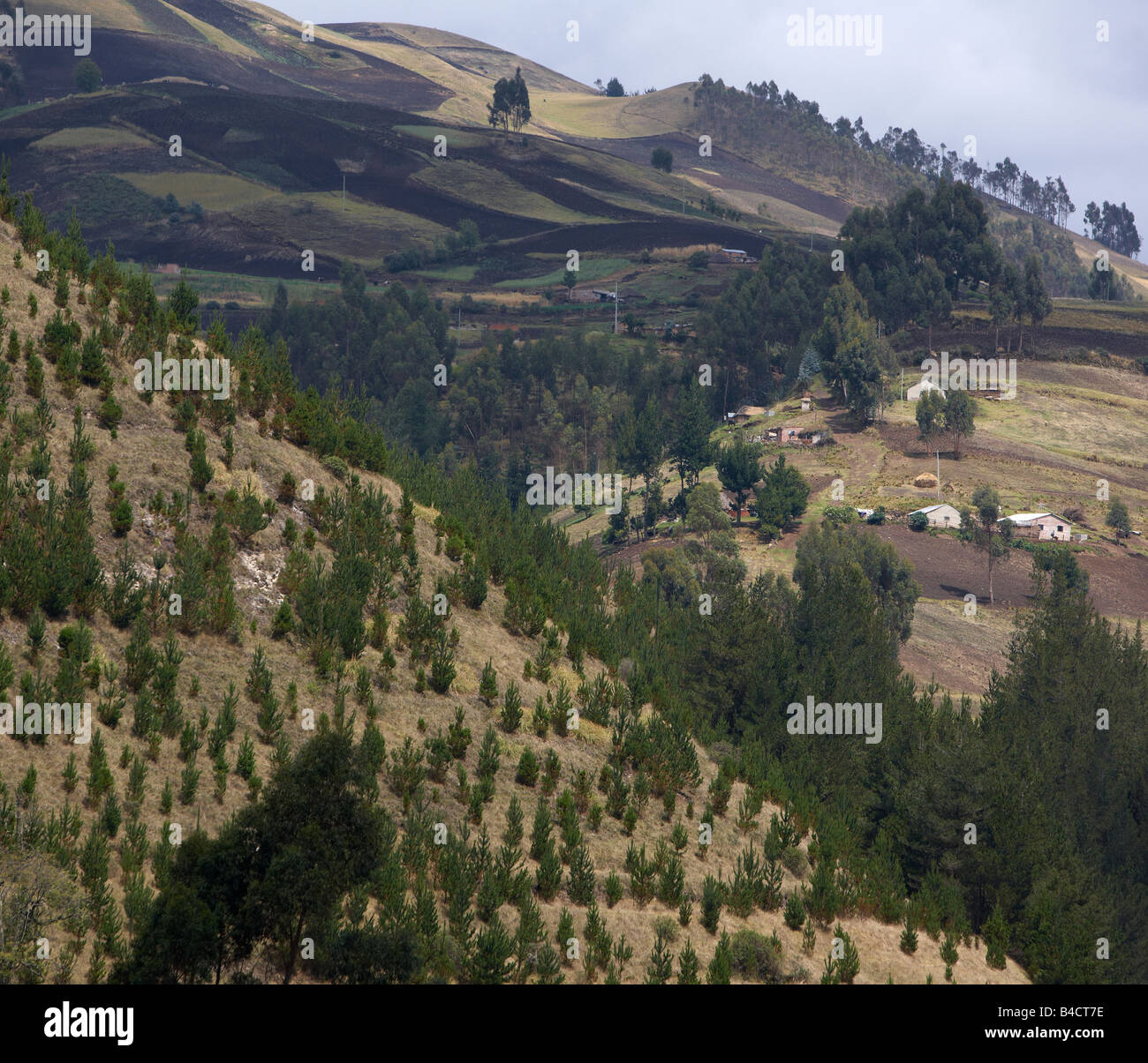 Slopes with fields, Alausi, Ecuador - Stock Image