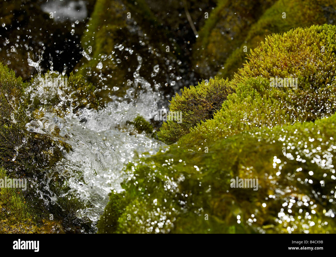 Fresh drinking water creek with moss, Iceland - Stock Image