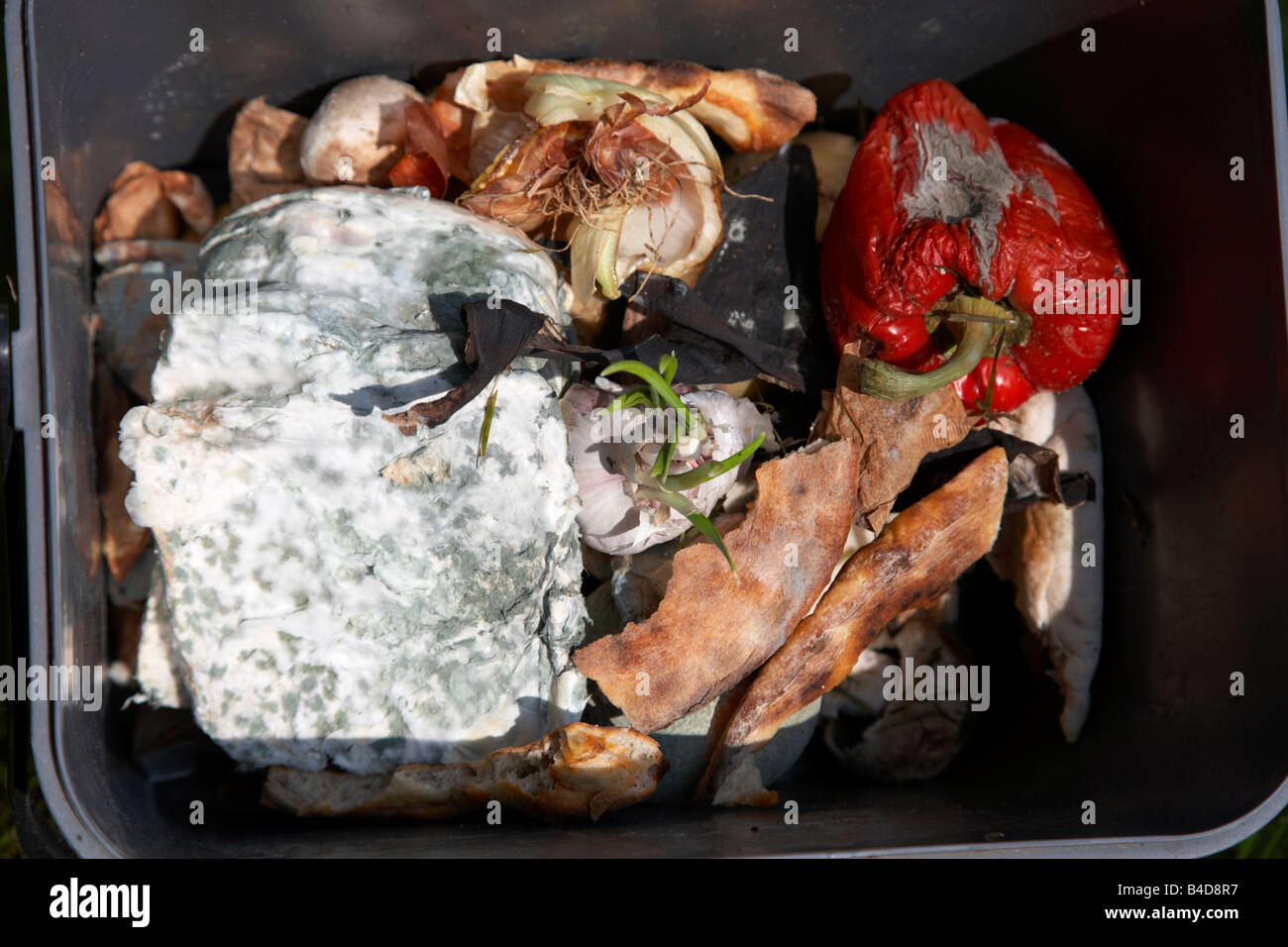 rotting wasted food thrown out by a household into a bokashi kitchen recycling bin in the uk - Stock Image