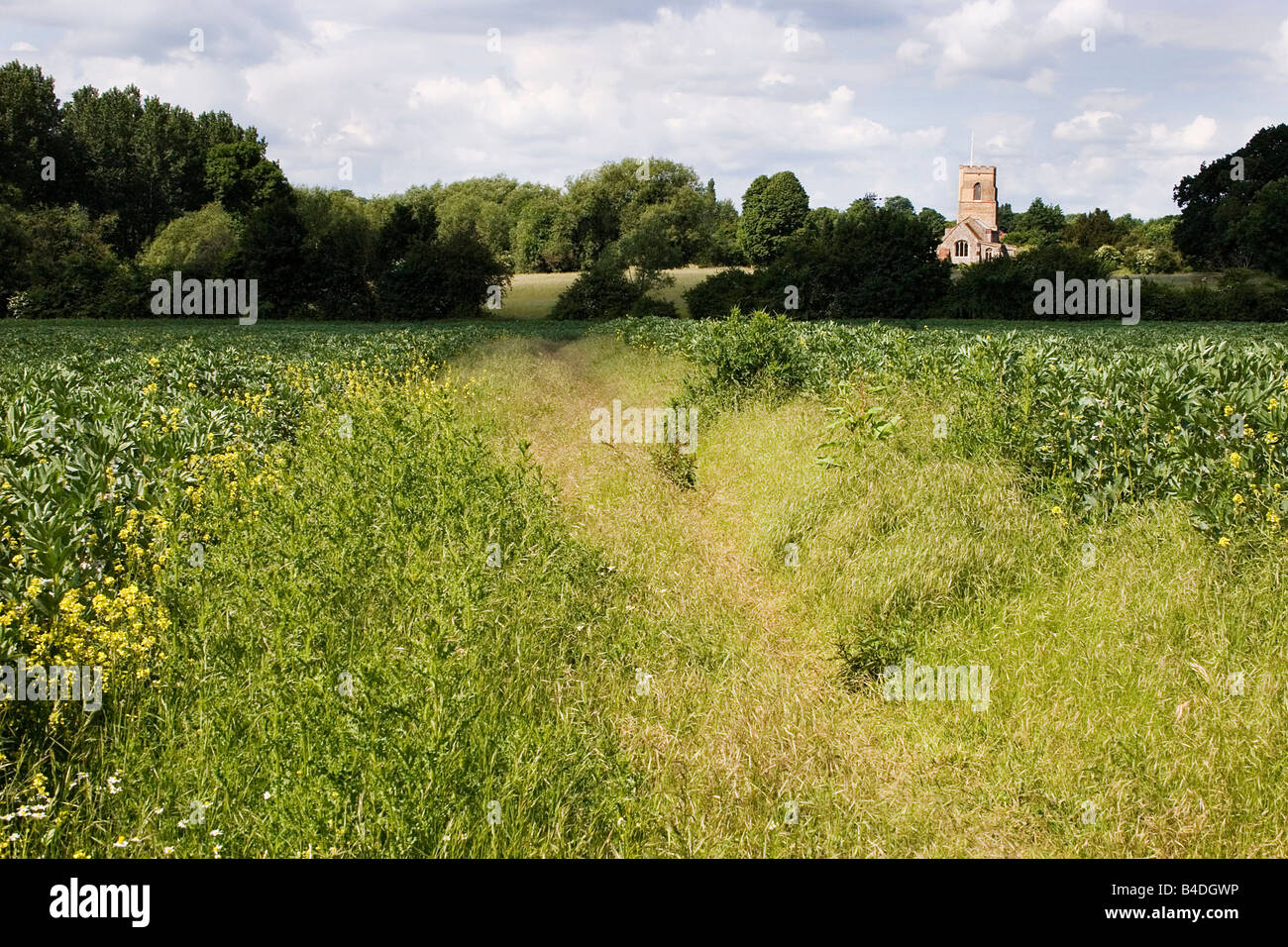 St Lawrence Church and public footpath Ridgwell Essex - Stock Image