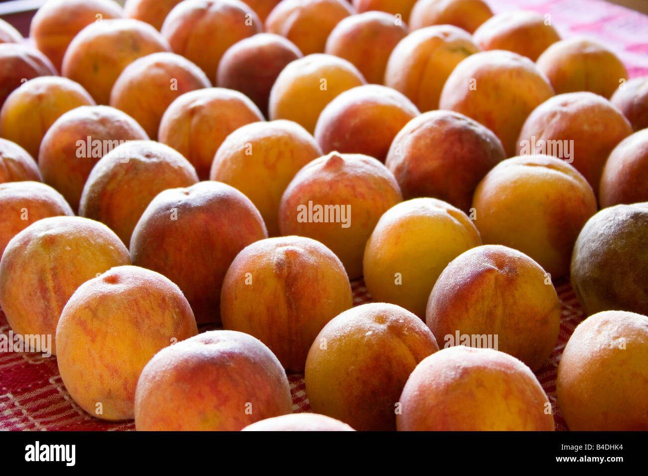 Peaches laid out on a table cloth to ripen - Stock Image