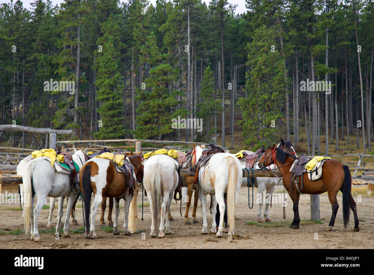 Dude Ranch Horses