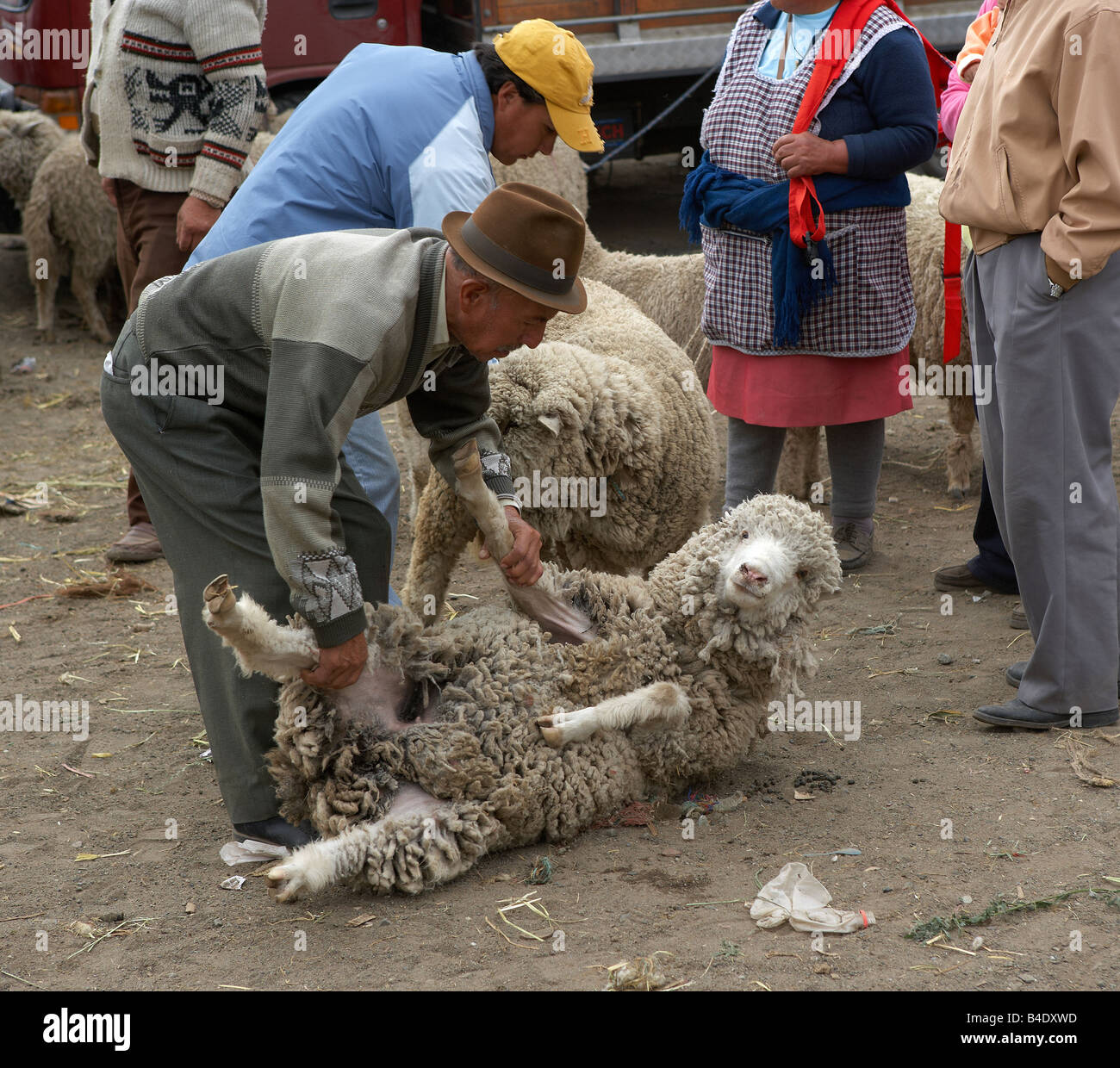 People with Sheep, Saquisili Market, Ecuador - Stock Image