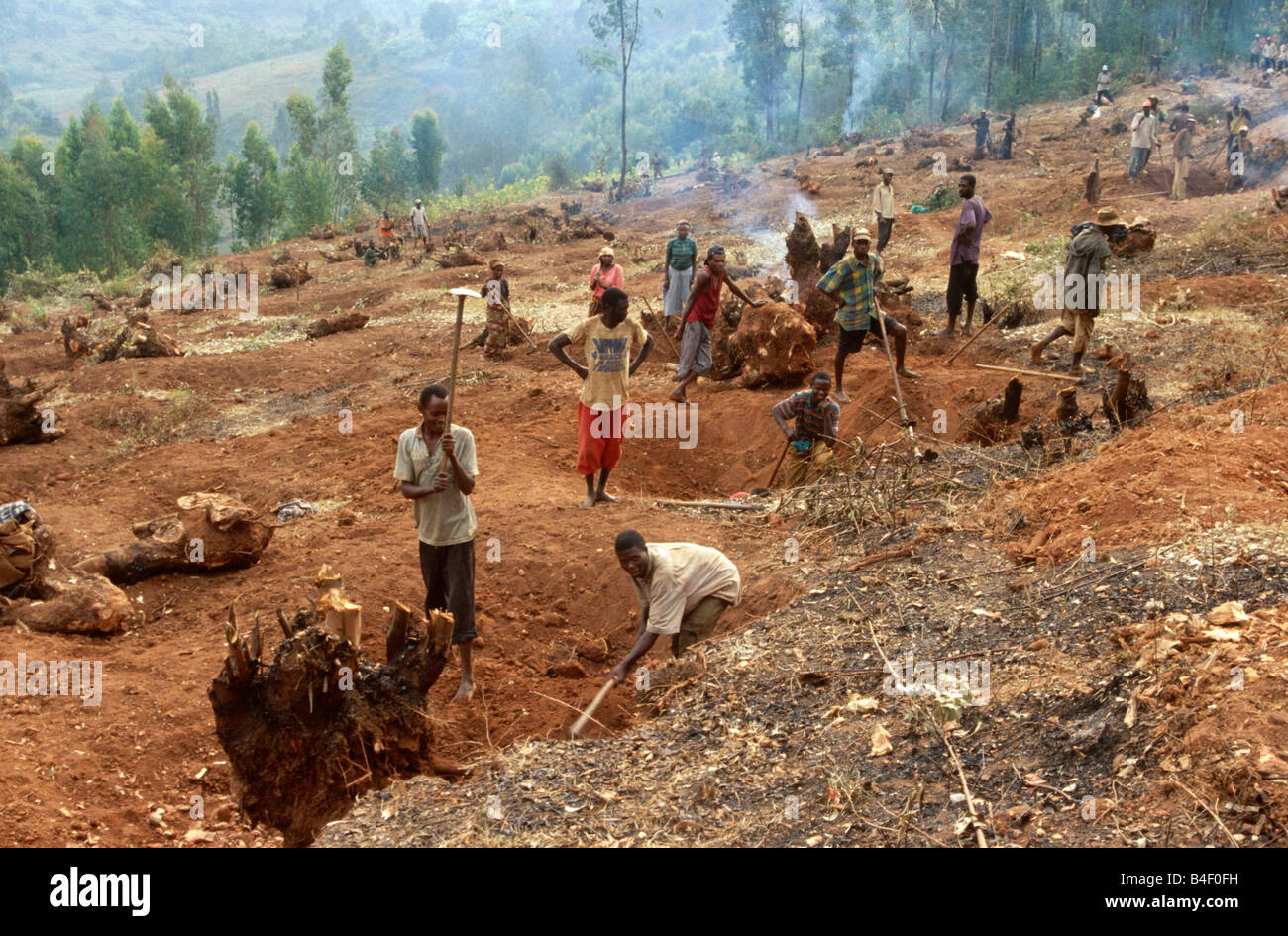 Workers clearing trees and preparing rural land for agriculture redevelopment project, Angola, Africa Stock Photo
