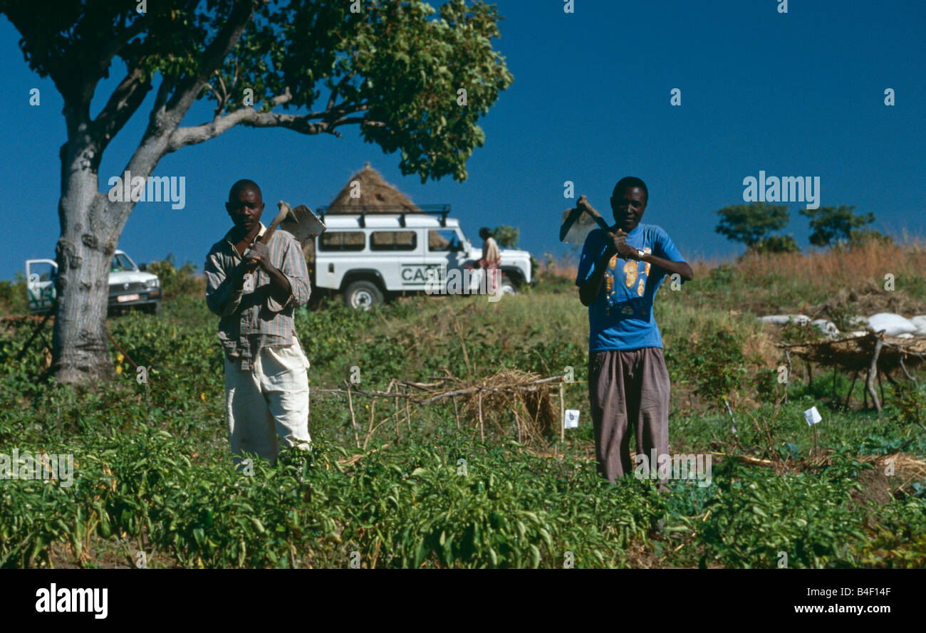 NGO CARE's project for agriculture redevelopment in war-ravaged Angola. Stock Photo