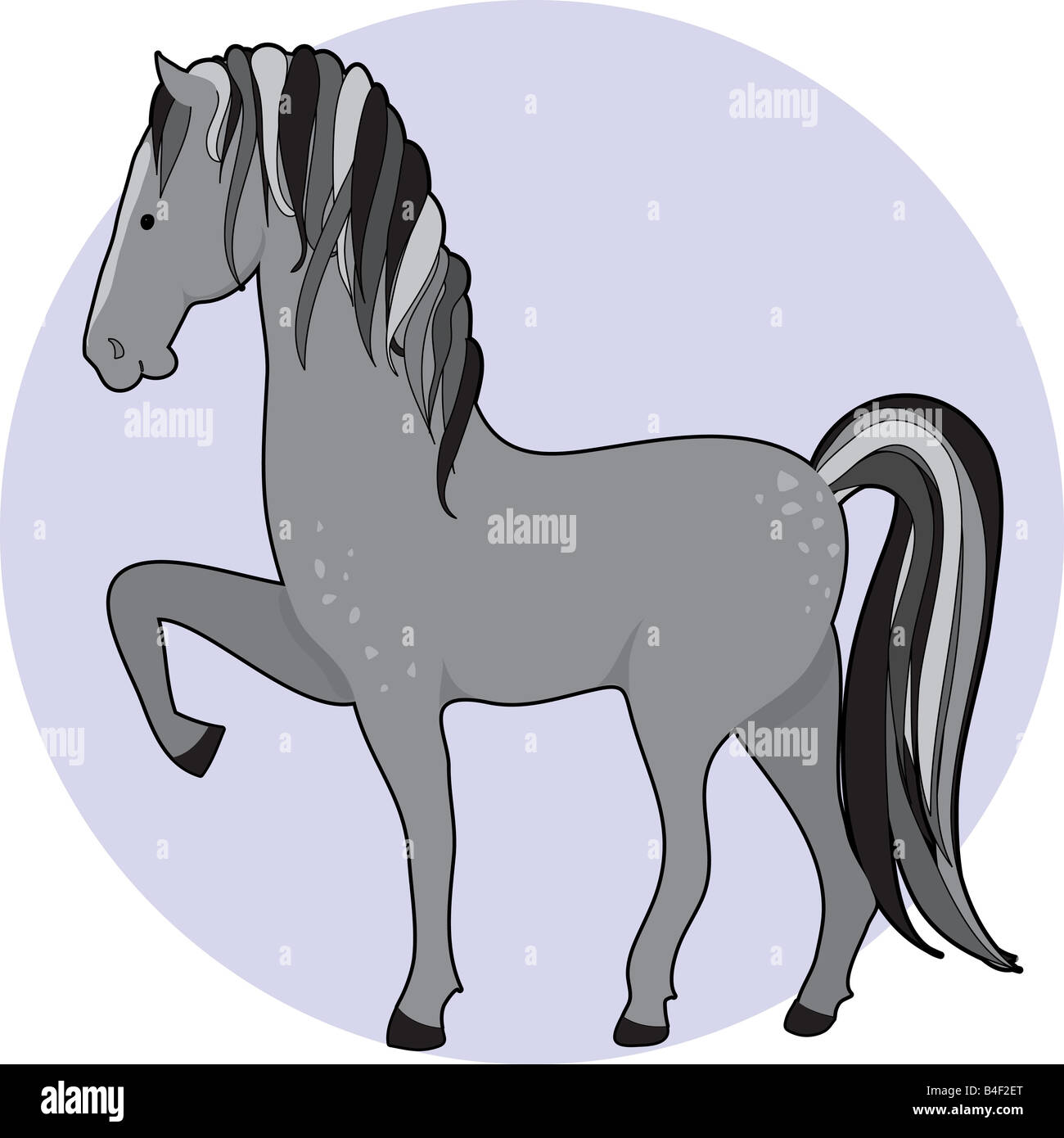 A dapple gray horse standing with one front leg up Stock Photo