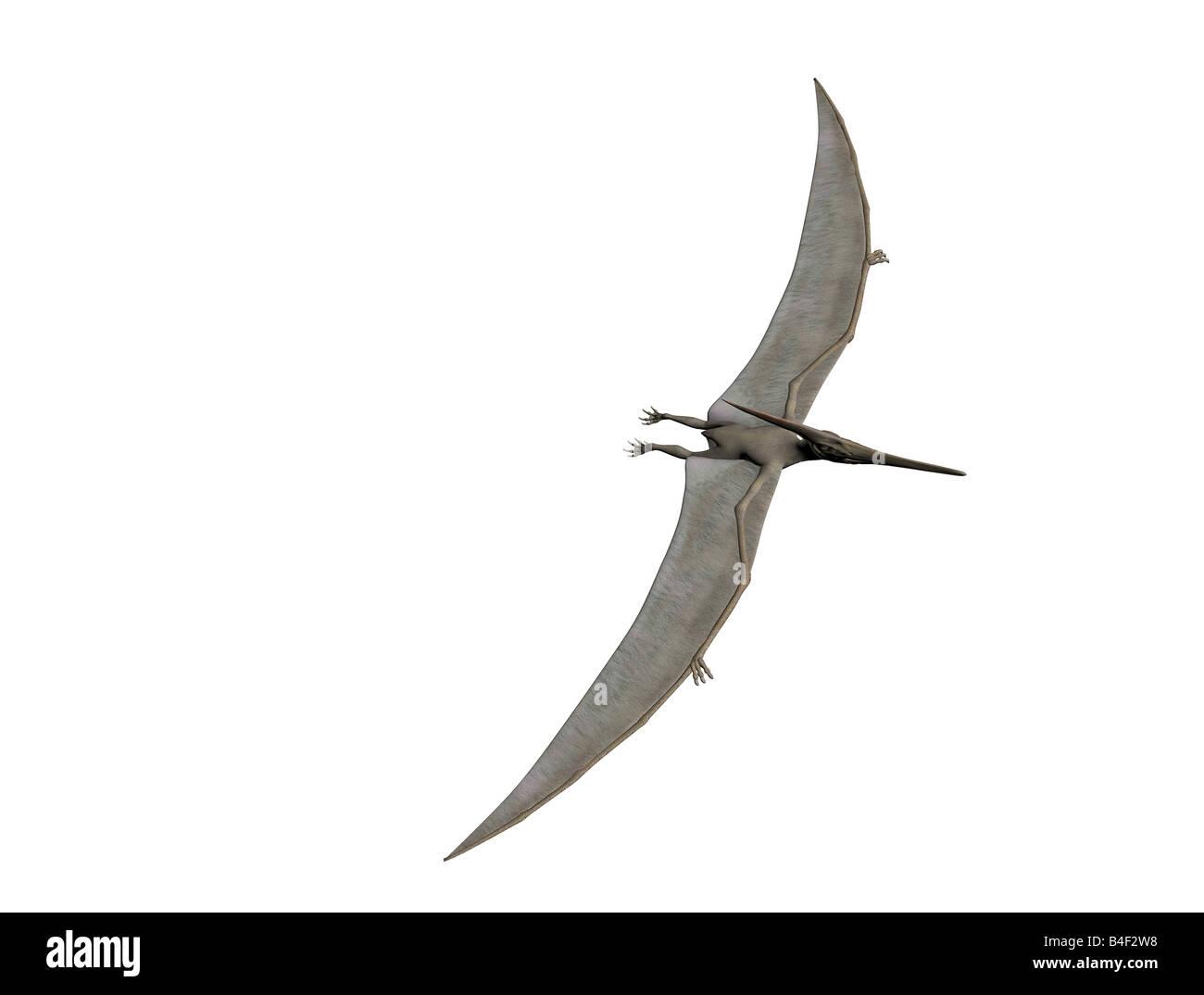 Dinosaur Pterodactyl Pteranodon Flying Stock Photos   Dinosaur ... 09766b14c