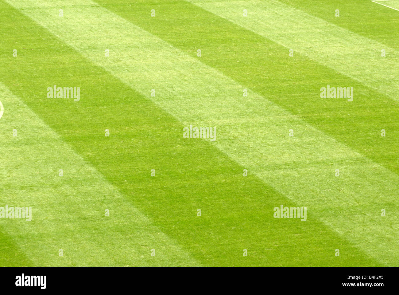 Lawn in a football stadium - Stock Image