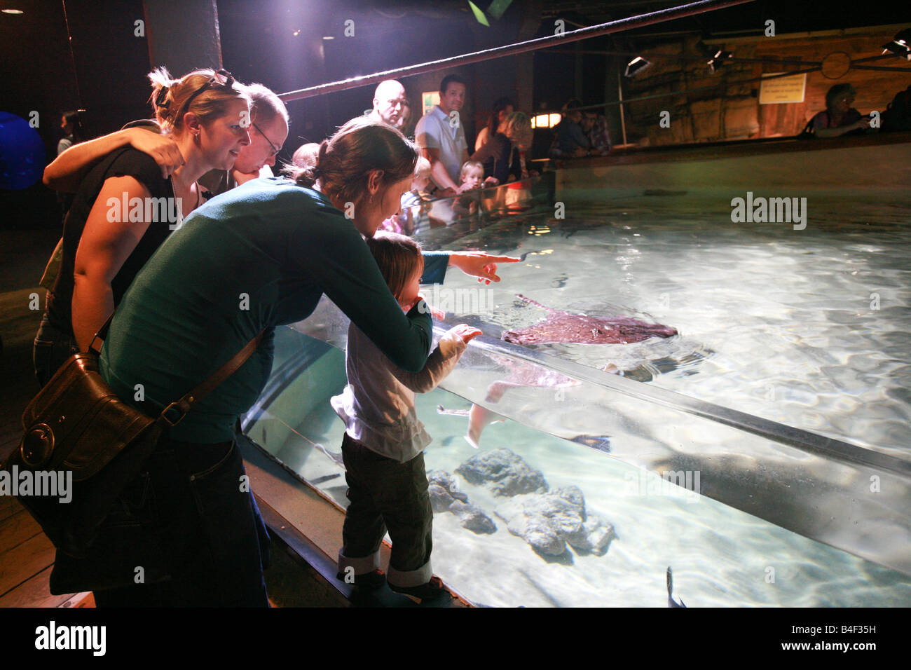 Tourists watch giant rays in glass fish tank at London Aquarium a popular visitor landmark attraction UK - Stock Image