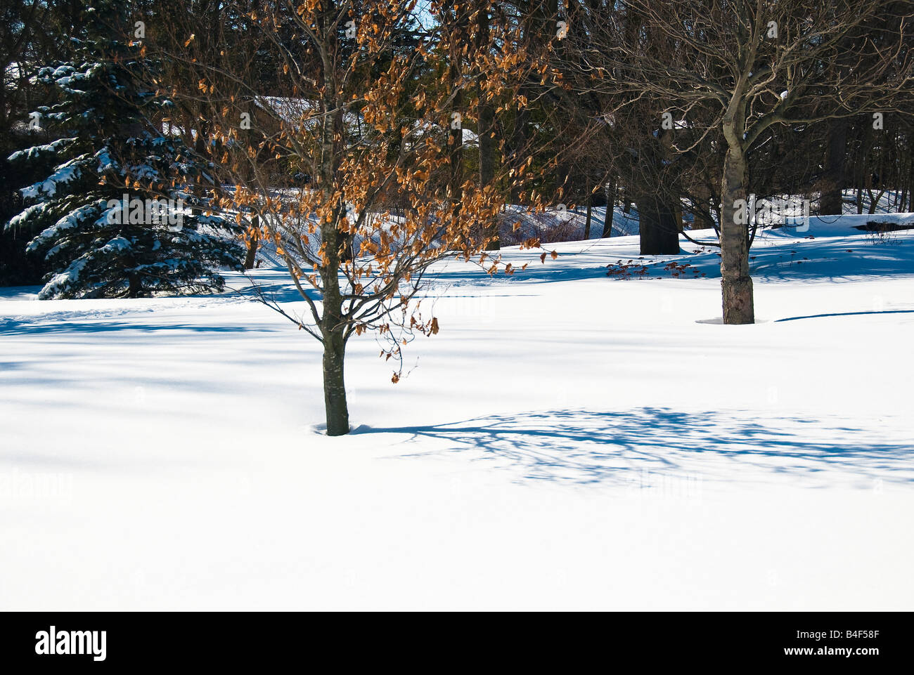 A canadian winter scene at Gairloch Gardens in Oakville, Ontario,Canada - Stock Image