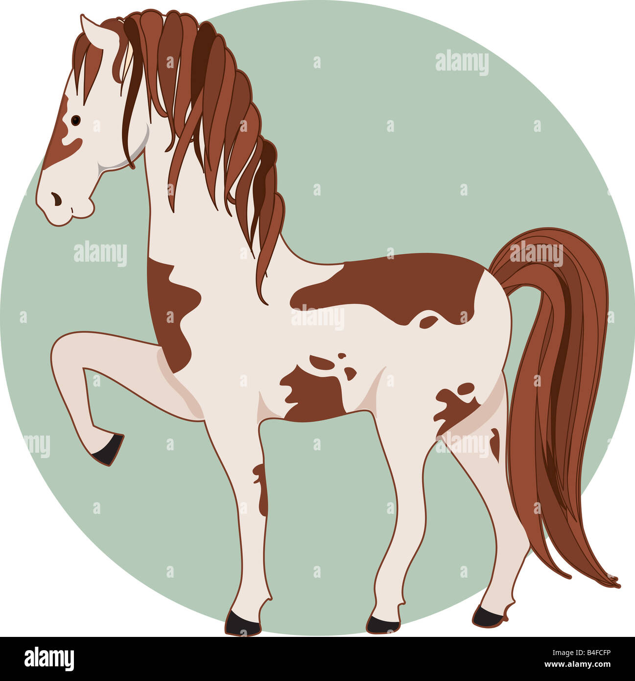 A pinto horse standing with one front leg up Stock Photo