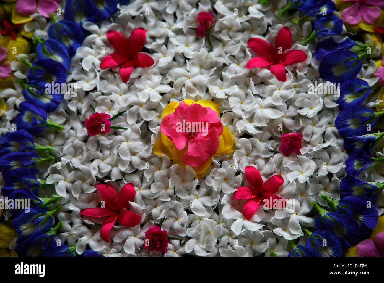 Floral design ( floating flowers) of india - Stock Image