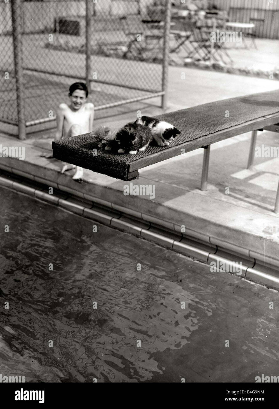 53b90fc760b A Kitten sleeping on a diving board at Oasis swimming pool on diving board  May 1951