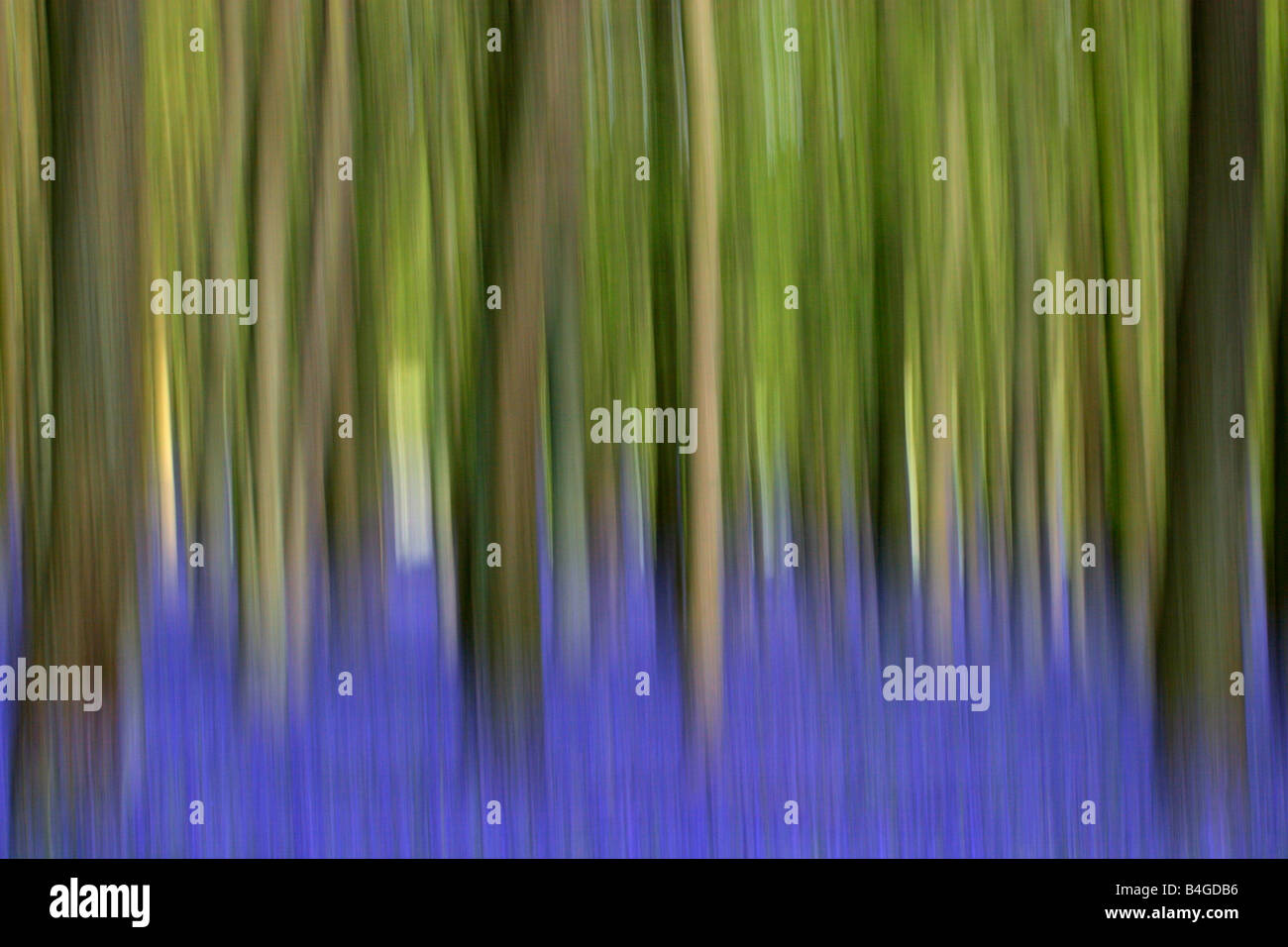Abstract image of Bluebells Endymion non scripta in Beech woodland in Spring Taken May Hertfordshire UK - Stock Image