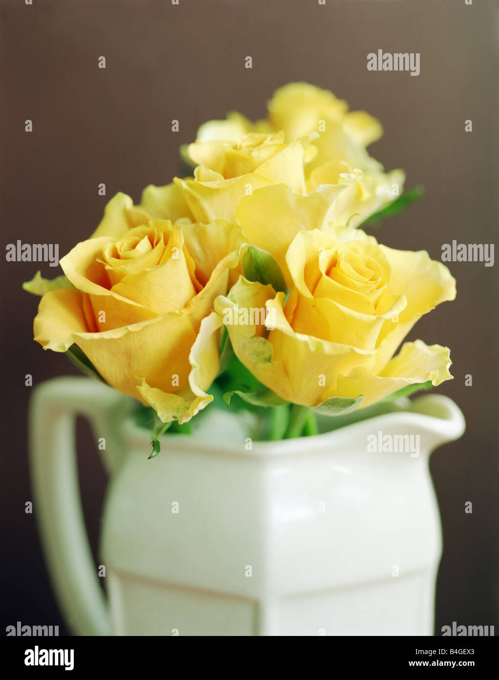 yellow roses in white jug close up - Stock Image