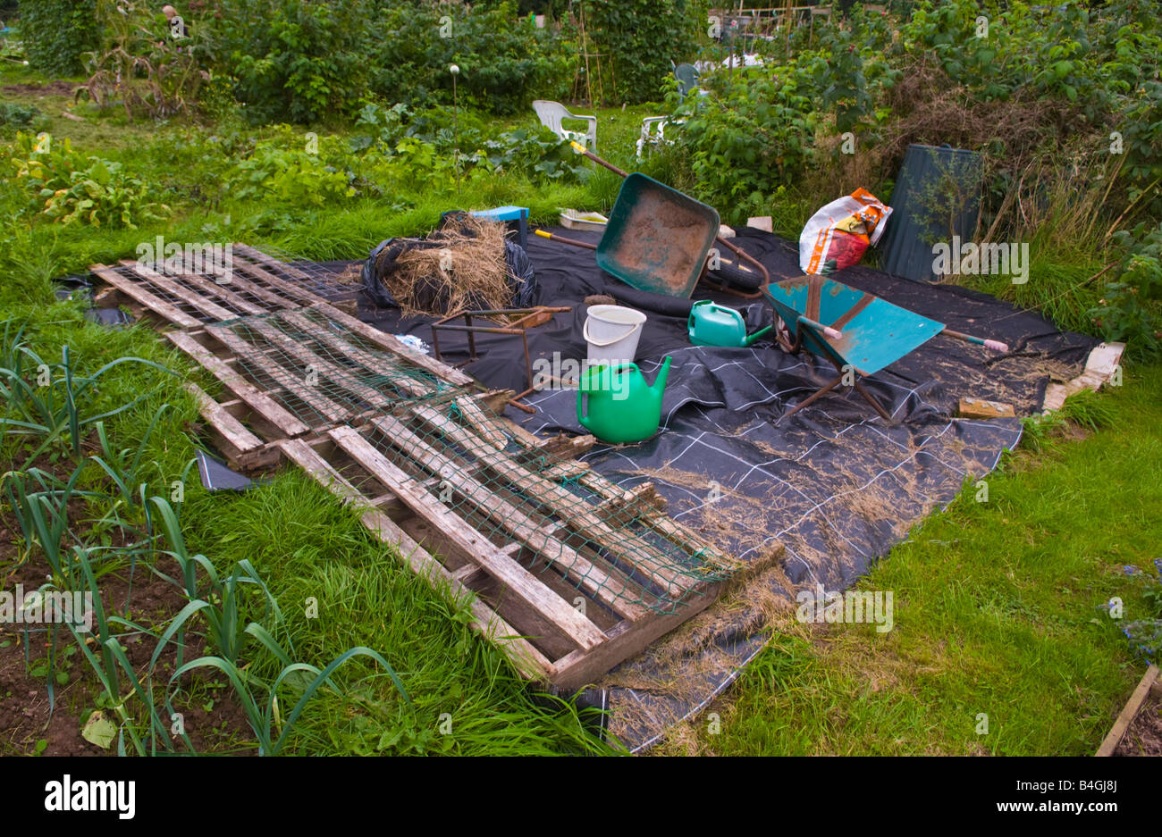 Black plastic used as a mulch to suppress weed growth on untidy organic allotment UK Stock Photo