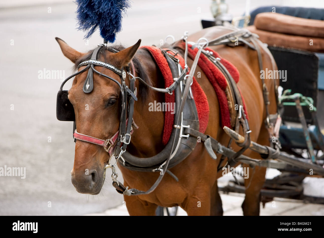 A horse-drawn carriage in Old Montreal, Quebec - Stock Image