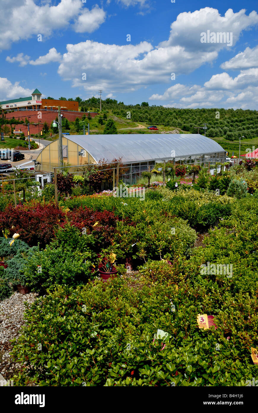 A sea of shrubbery surrounds one of the many greenhouses at Soergel Orchards & Farm Market in Wexford, Pittsburgh, - Stock Image