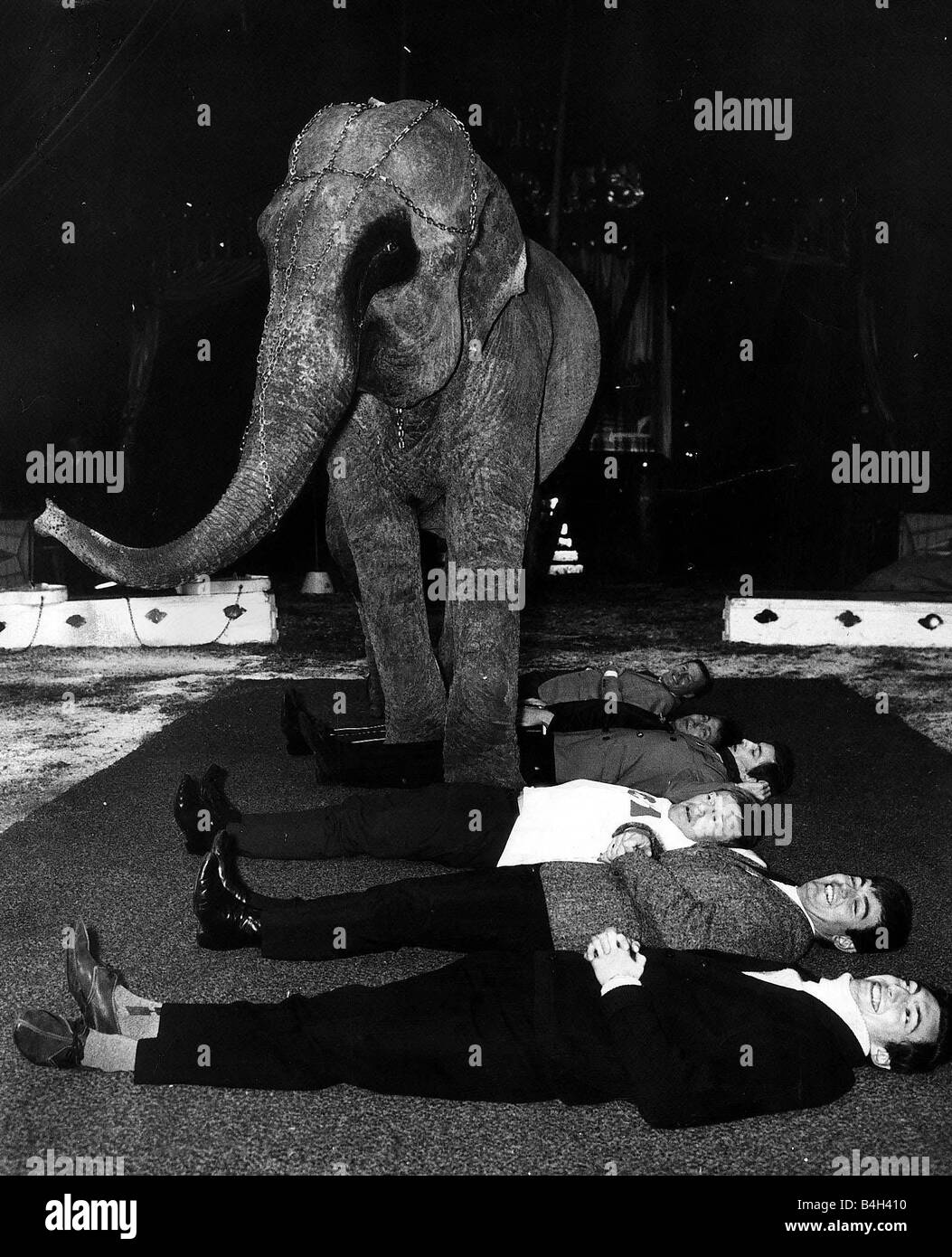 752a11977dfb Circus Animal Elephant November 1967 Burma the Elepahnt stepping over BBC  Radio 1 DJs are pictured