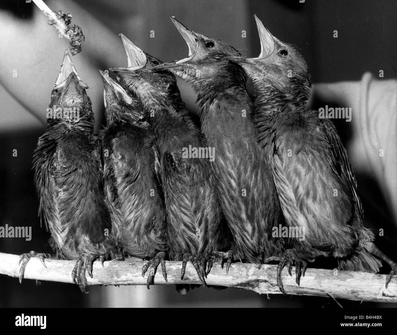 Animal Birds May 1985 - Stock Image