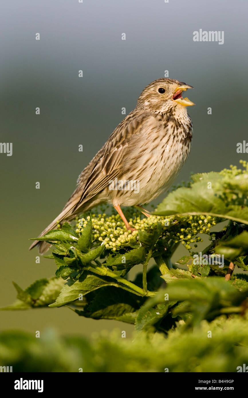 Close-up of bird perching on tree, Austria - Stock Image