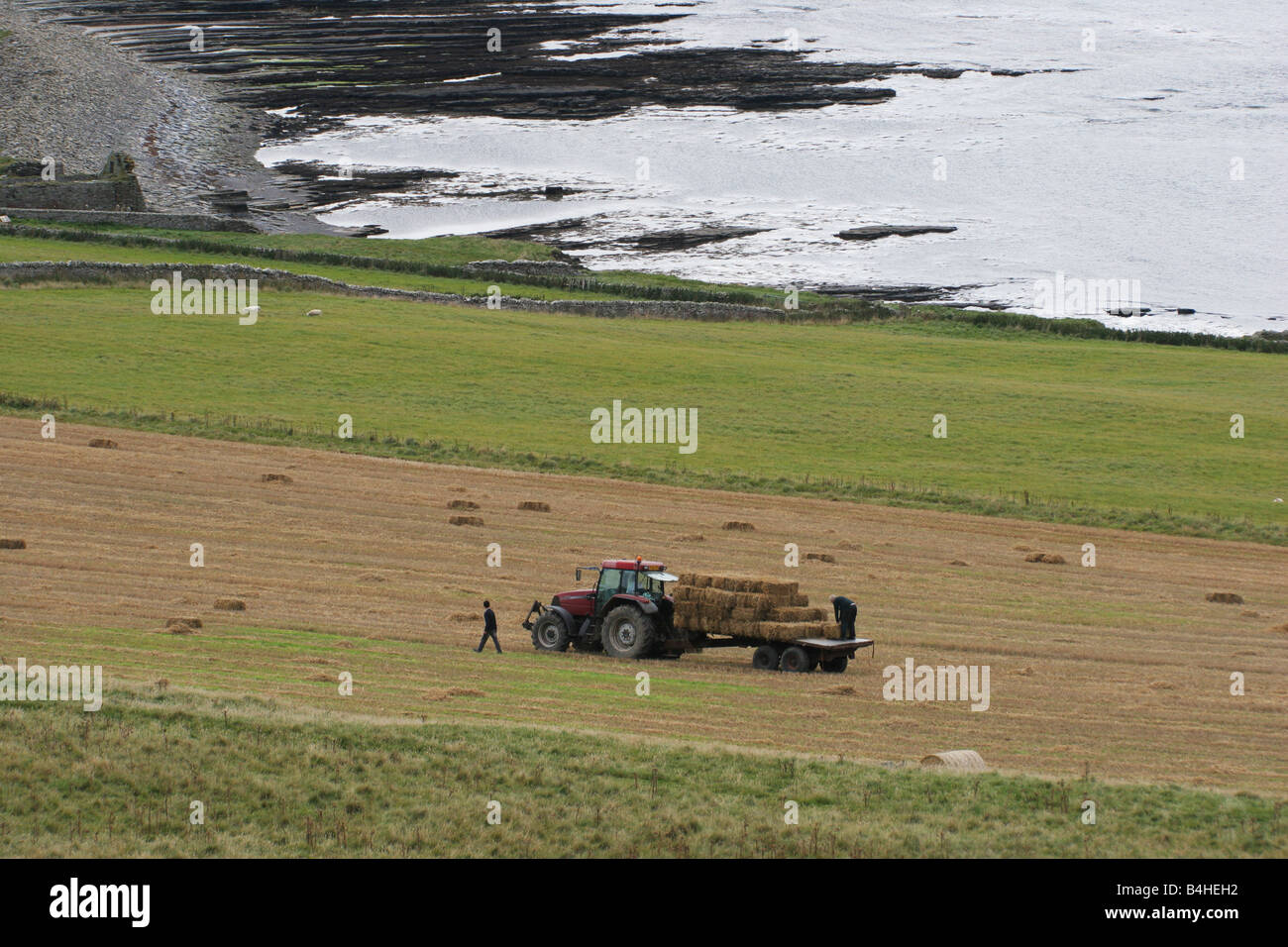 Harvest time at Westness on the island of Rousay, Orkney, Scotland - Stock Image