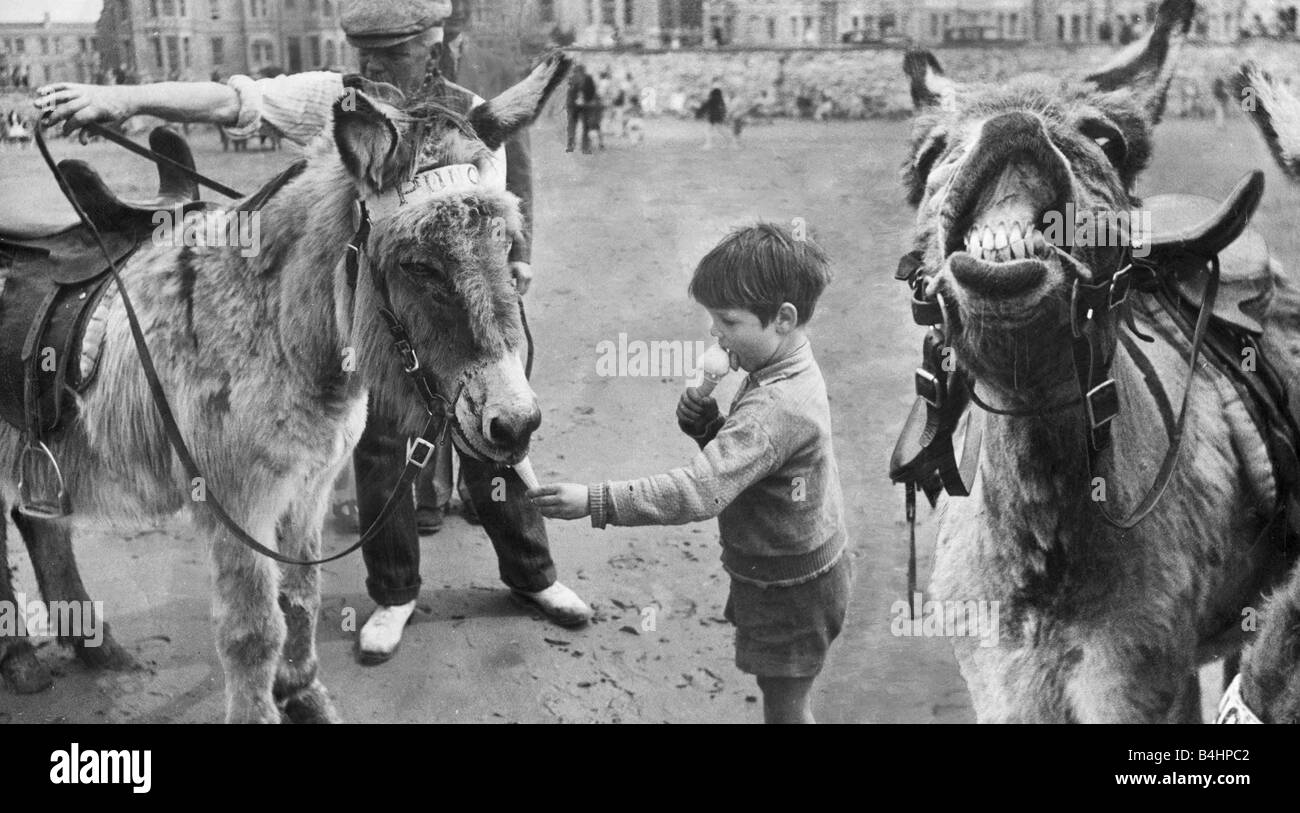 A small boy enjoys a ice cream cone with the donkey rides on the beach at a south coast seaside resort Join Up - Stock Image