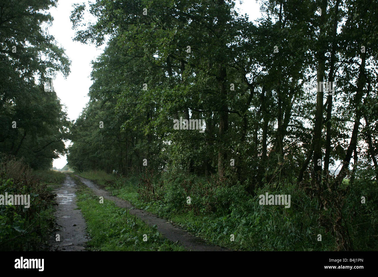 The woods in Suffolk where the Holly and Jessica s bodies were found off a dirt track - Stock Image