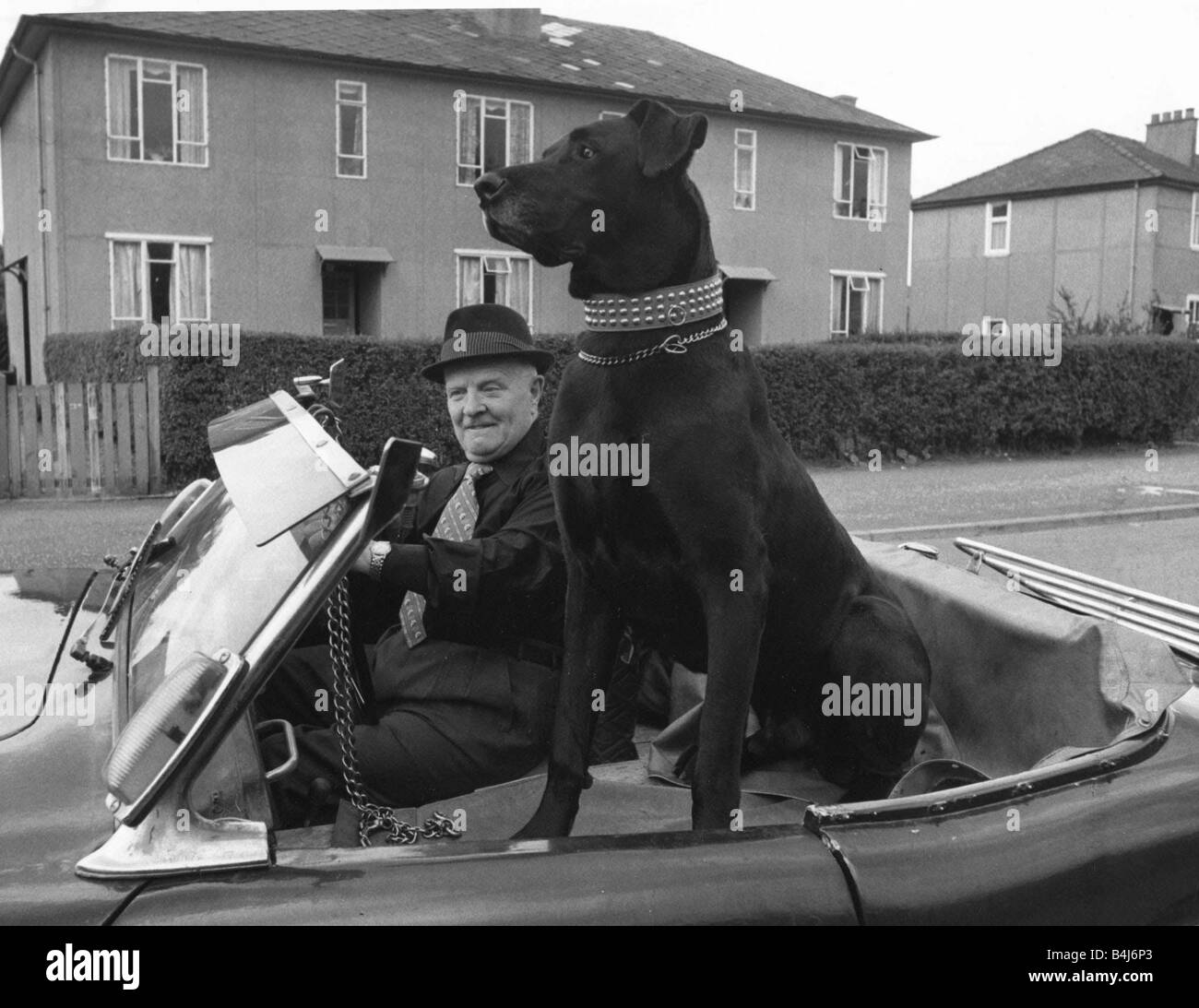 Alf McCormac with his Great Dane Flannigan in the sports car he bought specially for his pet Dog sitting in a convertible - Stock Image