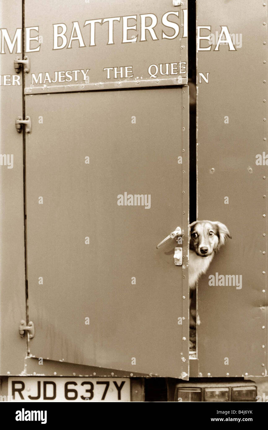 Dog Looking Out Of A Trailer Door At Battersea Dogs Home Stock Photo