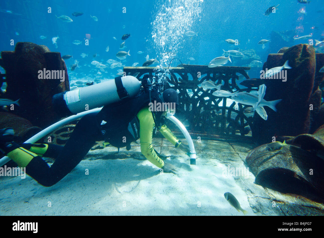 Diver cleaning the Ambassador Laggon an 11 Million Liter Fish Aquarium Atlantis Hotel The Palm Dubai United Arab - Stock Image